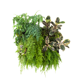 A vertical garden with plants suspended