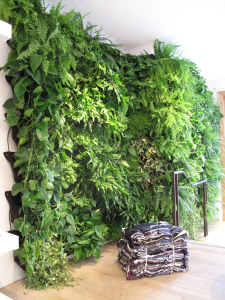 green wall inside