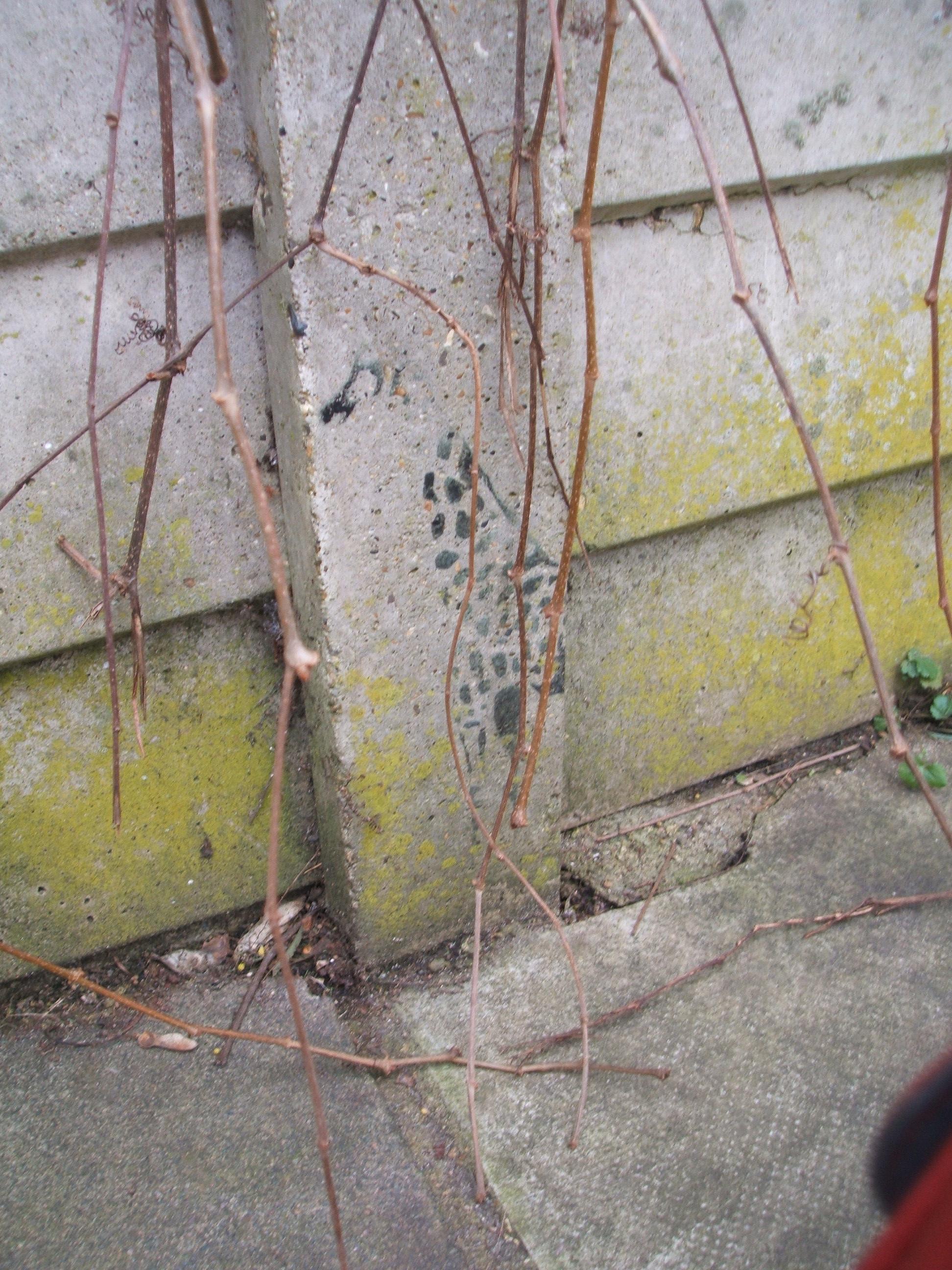 A stencil on the garden wall of a giraffe