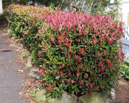 hedge garden art