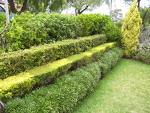 hedge art design