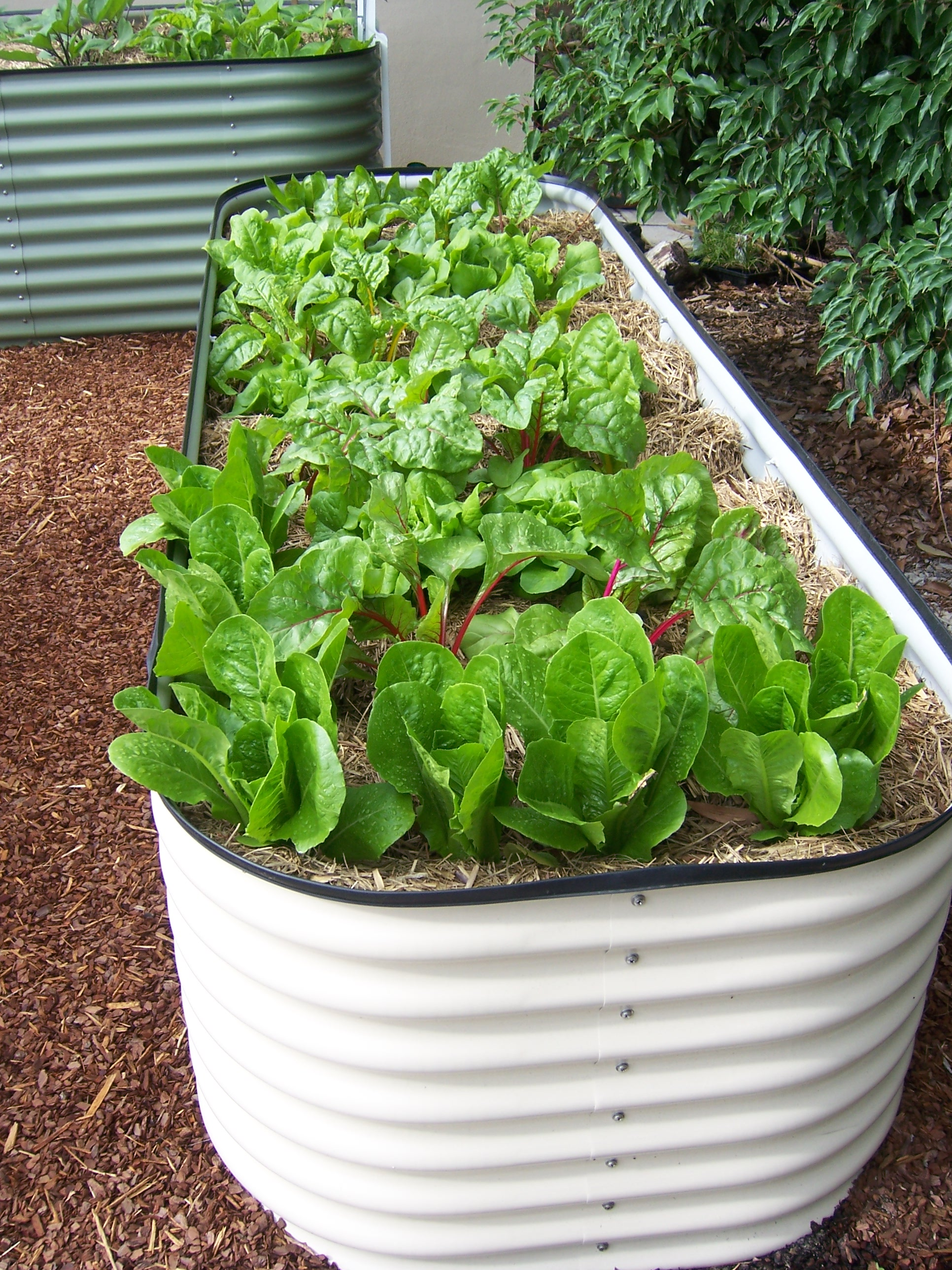 vegetables planted in raised planting beds made from steel