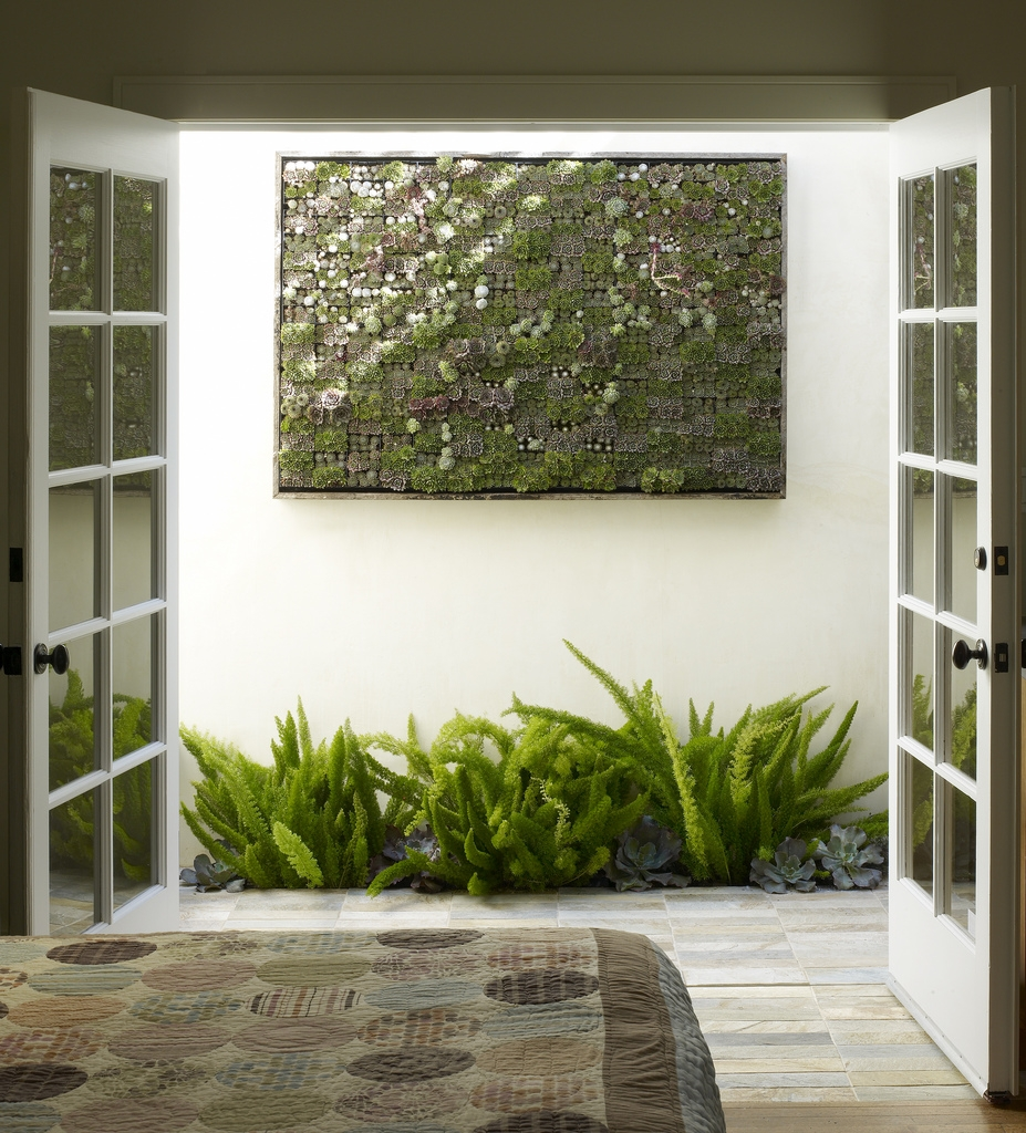green wall of succulents