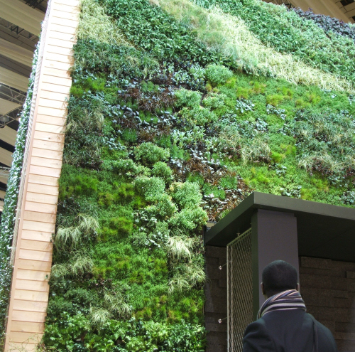 green wall with timber