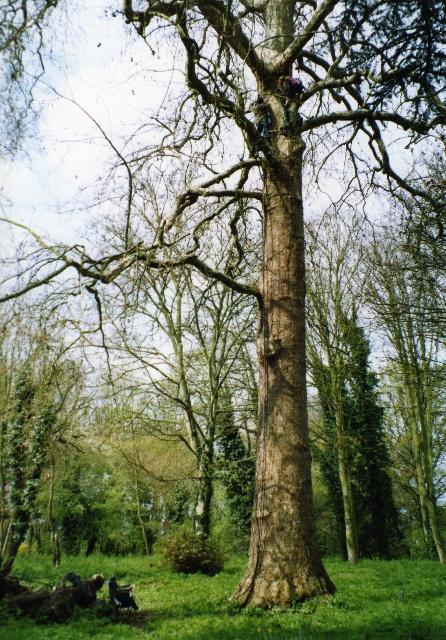outdoor tree art