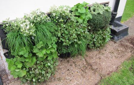 temporary vertical garden holding wall