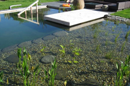 wetland swimming pool