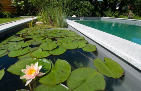 swimming pools with plants modern design