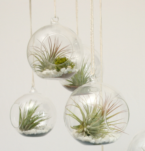 eco gifts air plants